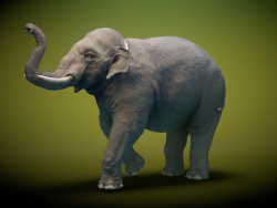 Modèle 3D Elephant asiatique Rigged Low-poly