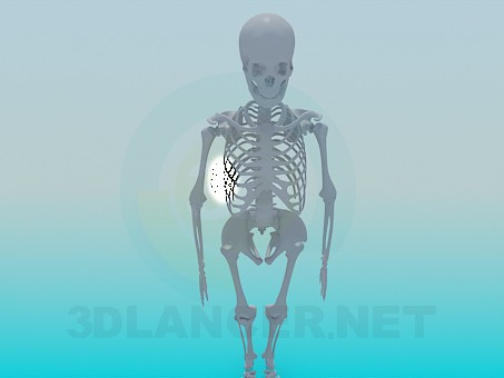 3d modeling Human skeleton model free download