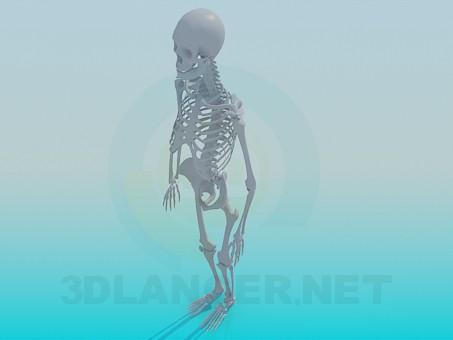 3d model Human skeleton - preview
