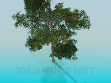 3d model Pine - preview