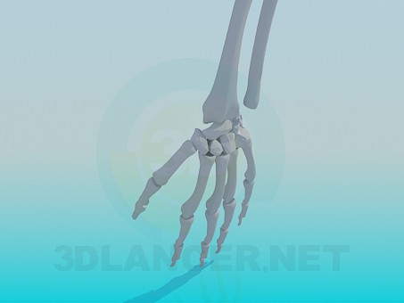 3d model The bones of a human hand - preview