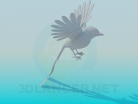 3d modeling Bird model free download
