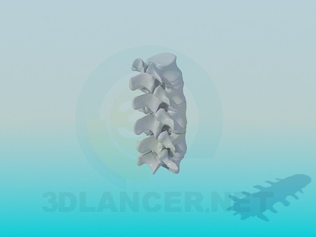 3d model The Vertebrae - preview