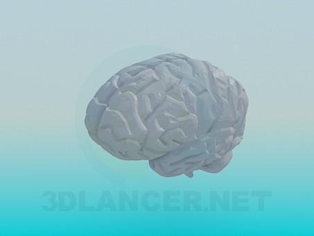 3d модель Человеческий мозг – превью