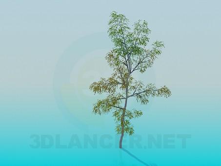 3D modeli Huş ağacı - önizleme