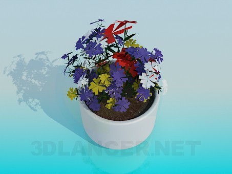 3d model Pot with flowers - preview