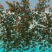 3d model Wattling roses - preview