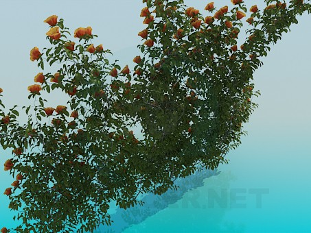 3d model Wattling roses - preview