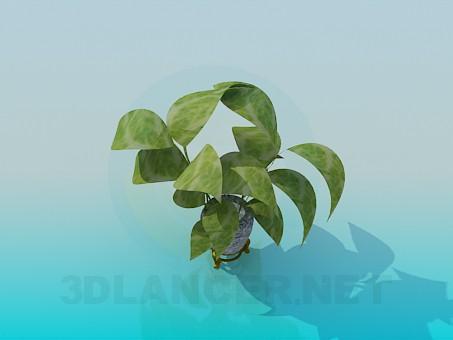 modelo 3D Ficus - escuchar