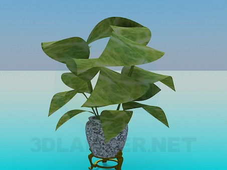 3d model Ficus - preview
