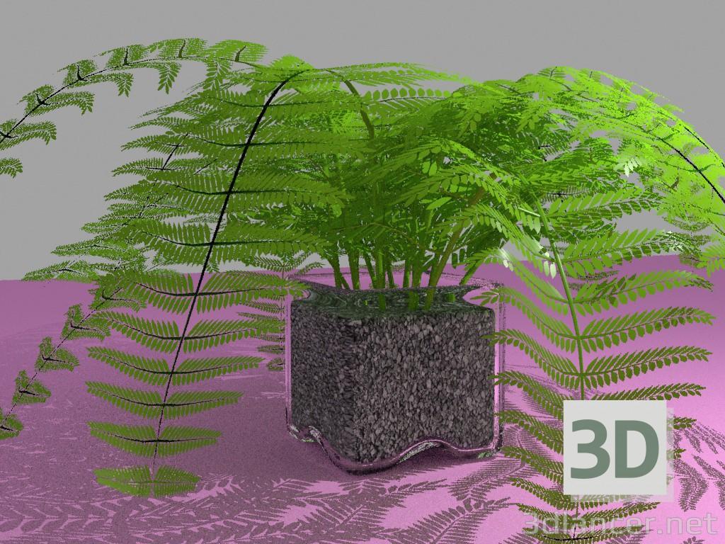 Modelo 3d Samambaia em um vaso - preview