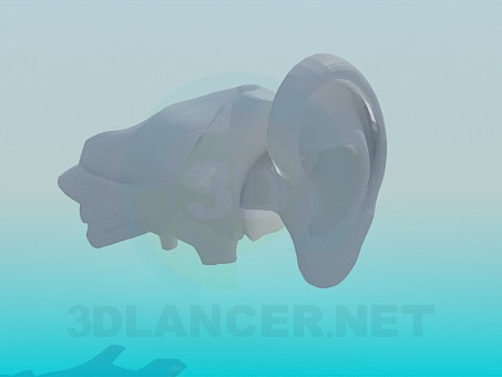 3d model The human ear - preview