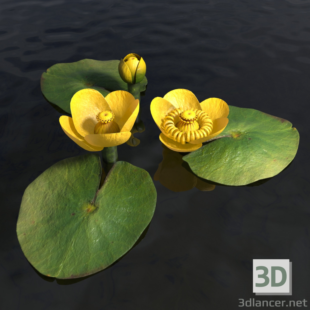 3d model Water lily - preview