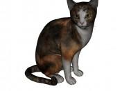 Barsik kedi 3
