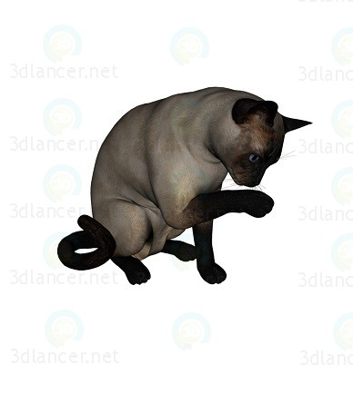 3d model Cat Barsik 4 - preview
