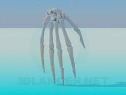 Los huesos de la mano humana