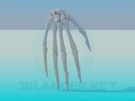 3 डी मॉडल मानव हाथ की हड्डियां - पूर्वावलोकन