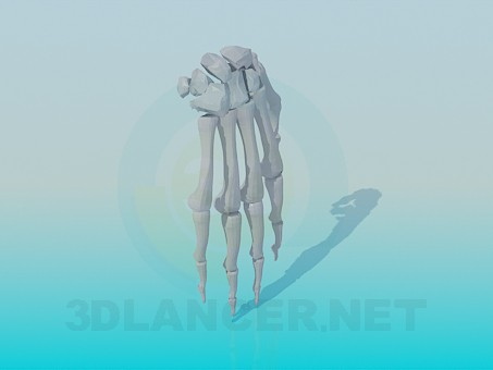 3d model The bones of the human hand - preview