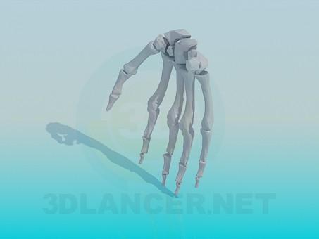 modelo 3D Los huesos de la mano humana - escuchar