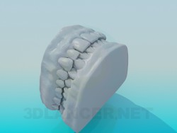 Model of human teeth