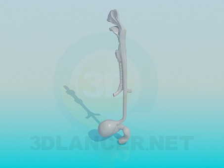 modelo 3D Esófago - escuchar