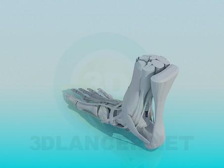 3d модель Кости ступней – превью