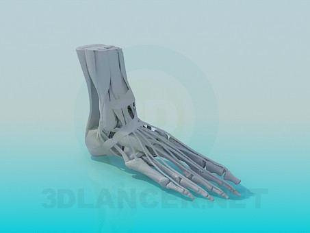 3d model The bones of the feet - preview
