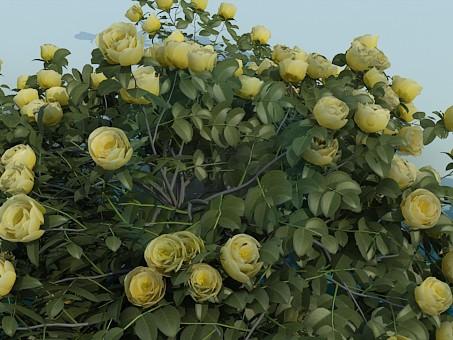 3d модель Кущ троянд – превью