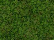Senza interruzioni trama di erba