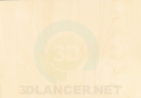 Texture Mainau Birch free download - image