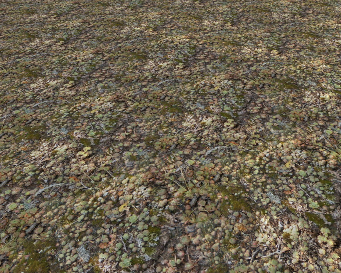 Land in the garden, forest. download texture - thumbs