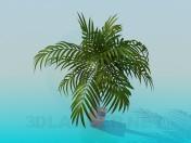 Palma in a flowerpot