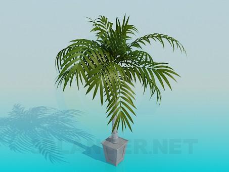 3d model Palma in a flowerpot - preview