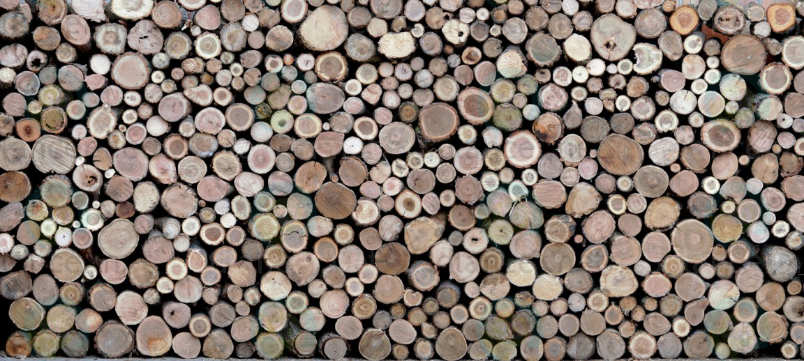 Текстура Cпил дерева, круглый торец скачать бесплатно - изображение