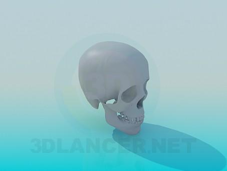 modelo 3D Cráneo - escuchar