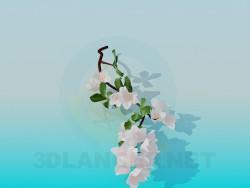 फूल शाखा