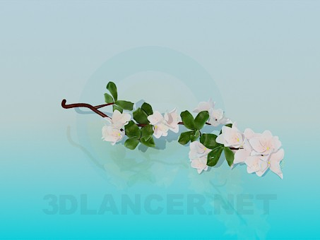 3d model Flowering branch - preview