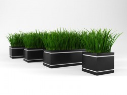 Grass for decoration