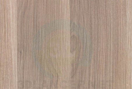 Descarga gratuita de textura Abedul islandés - imagen