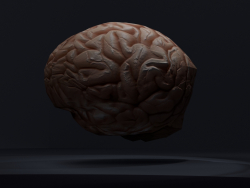 Low-poly Brain