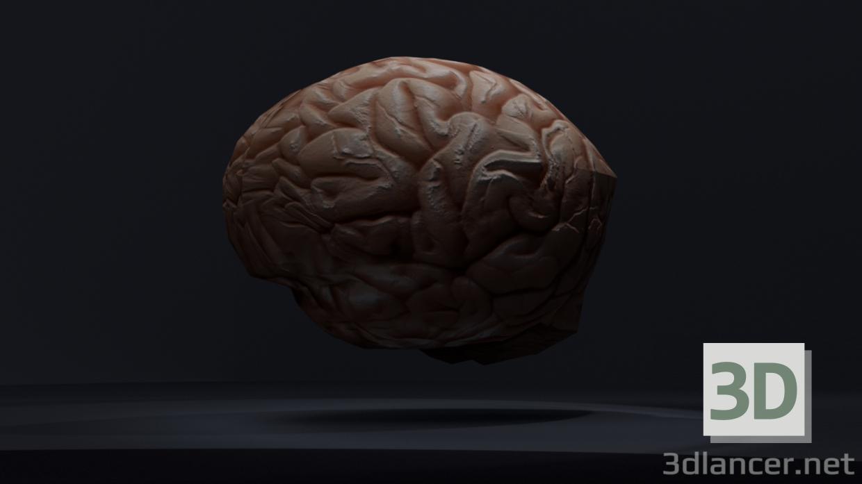 Modelo 3d Cerebro bajo-poly descarga 3dlancer.net