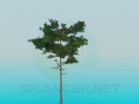 3d model Lush pine - preview