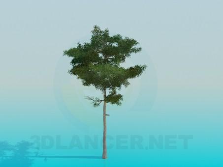 modelo 3D Exuberante pino - escuchar