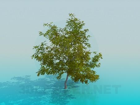modèle 3D Érable - preview