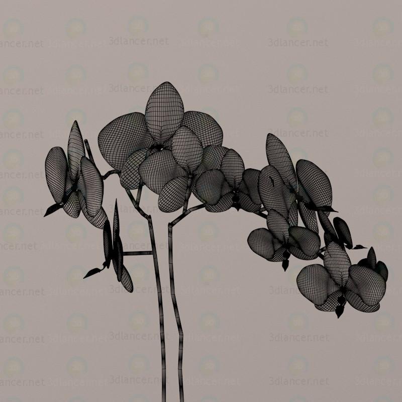 3d Орхідеї модель купити - зображення