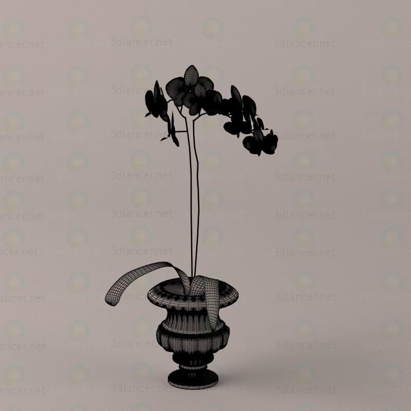 3d Орхидеи модель купить - ракурс