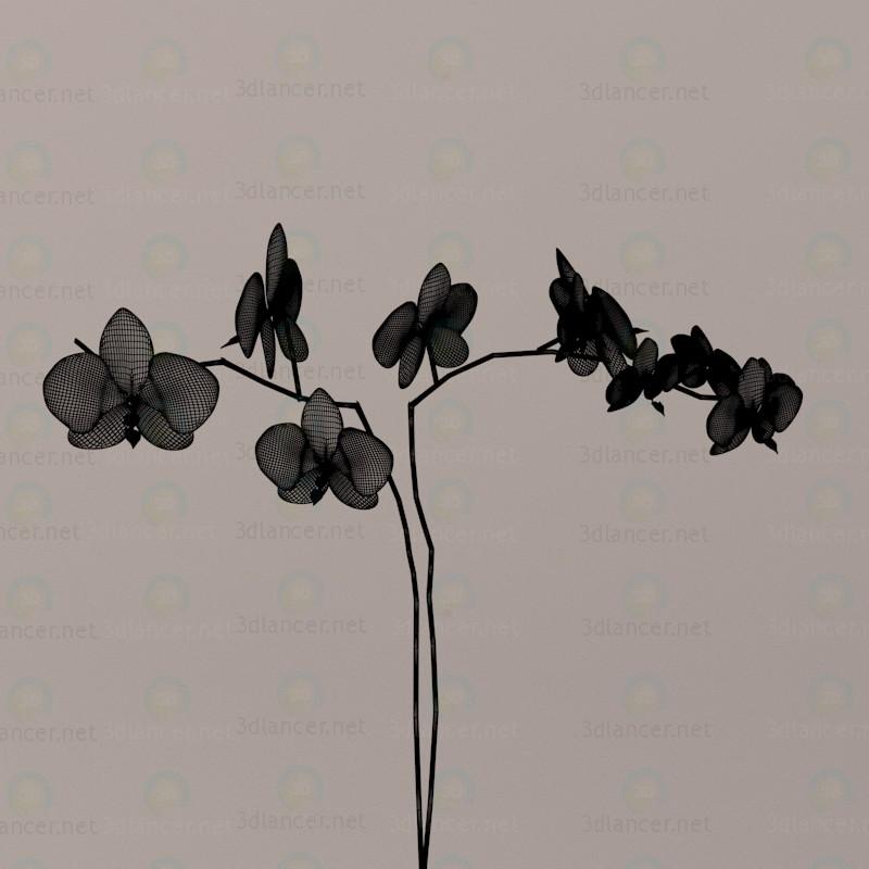 3d Orchids model buy - render