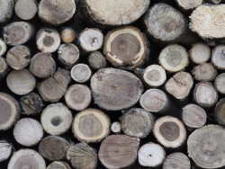 gefällte Bäume
