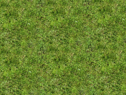 Texture erba