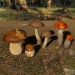 3d Mushrooms Set 2 model buy - render